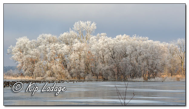 Hoarfrost at Sweet Marsh - Image 664214 (© Kip Ladage)